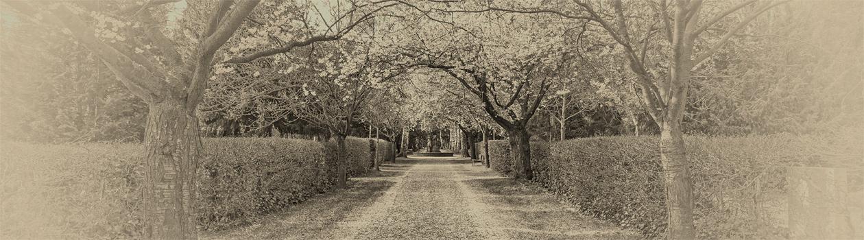 Luce Bestattungen rosdorf